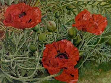 Spencer, Stanley, 1891-1959; Poppies