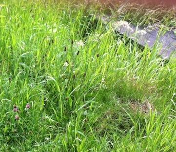 Grass_Graves