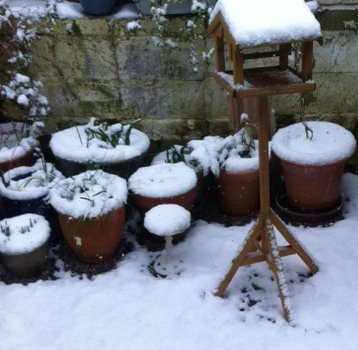Snow-1802-2