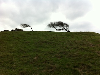 To-West-Bay-Trees