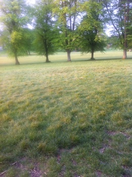 Park-early